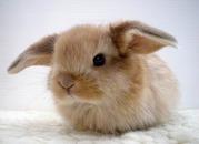 Хомячки,  шиншиллы,  белки,  декоративные кролики